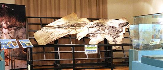 Civico Museo di Storia Naturale a Trieste