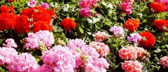 20°Tor Lupara in fiore a Fonte Nuova