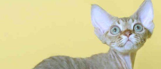 I gatti più belli del mondo al Palazzetto dello Sport a San Martino di Lupari