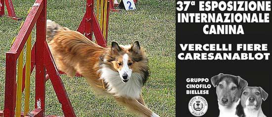 37^ Espozione Internazionale Canina a Vercellifiere