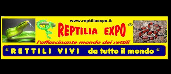 Reptilia Expo - L'affascinante mondo dei rettili a Belluno