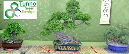 III Edizione Bonsai e Prebonsai al Tunno Green Design di Taviano