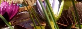 Viridalia mostra mercato di giardinaggio a Thiene