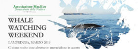 Whale watching weekend al Porto di Lampedusa