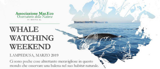 Whale watching weekend al Porto di Lampedusa